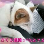 2013-04-06_16.17.02.jpg